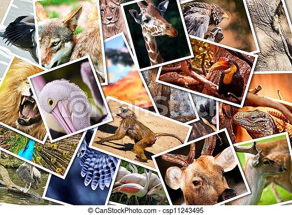 Otro collage de animales - csp11243495