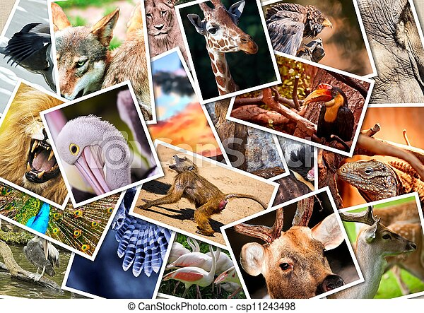 Otro collage de animales - csp11243498