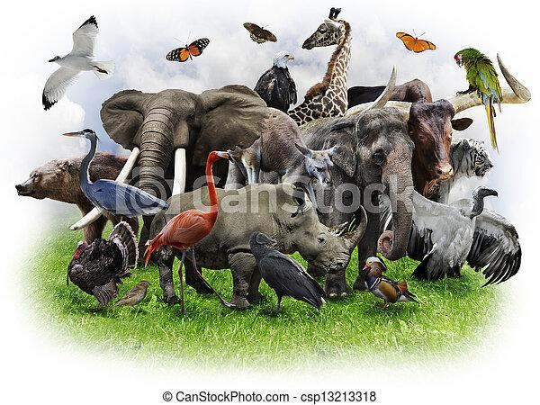 Collage de animales - csp13213318
