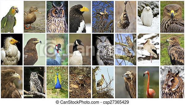 collage birds - csp27365429
