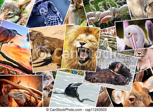 Otro collage de animales - csp11243503