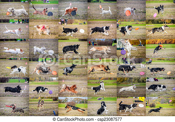 Collage dog frisbee - csp23087577