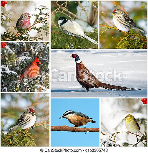collage., hiver, oiseaux - csp8305743