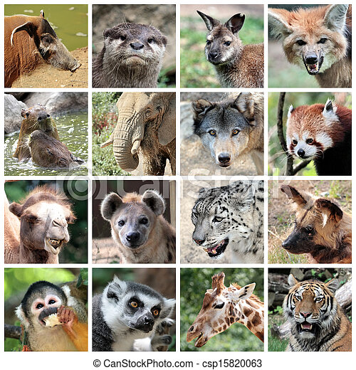 collage, mammifères, animal - csp15820063