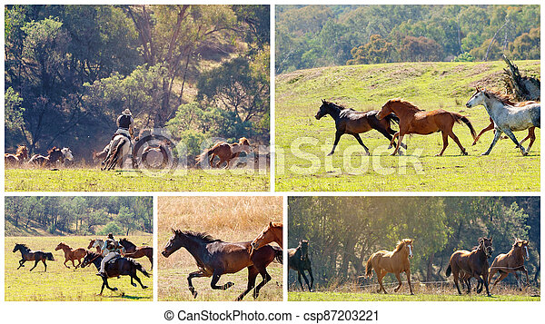 Collage Of A Herd Of Wild Horses Racing Across Country - csp87203221