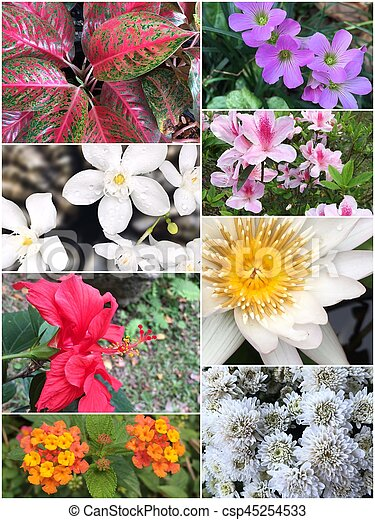 Collage of Beautiful variety of colorful flowers and plants - csp45254533