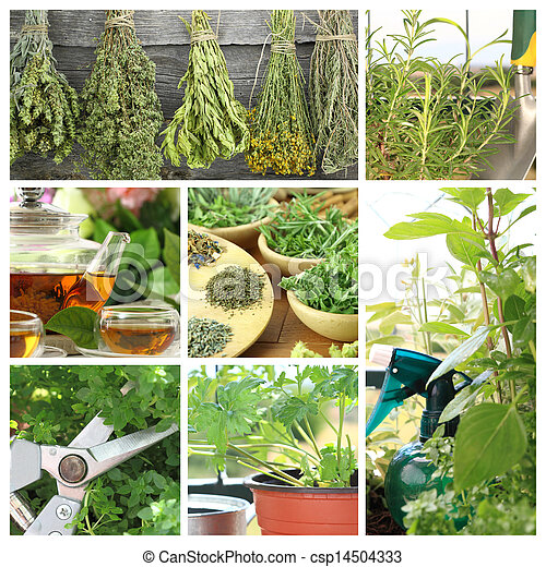 Collage of fresh herbs on balcony garden - csp14504333