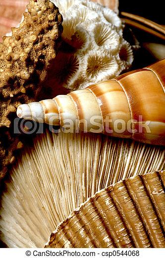 Collage of Sea Shells, Sealife - csp0544068