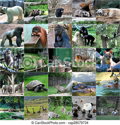 Collage Of Some Wild Animals