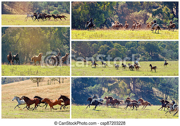 Collage Of Wild Horses Racing Across Country - csp87203228