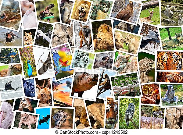 collage, olik, djuren - csp11243502