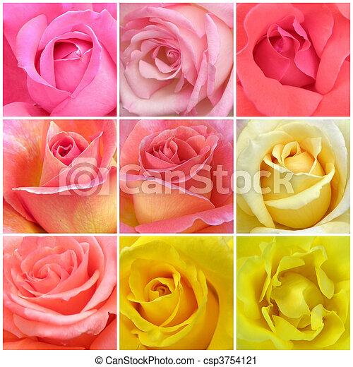 collage, roses, neuf, photos - csp3754121