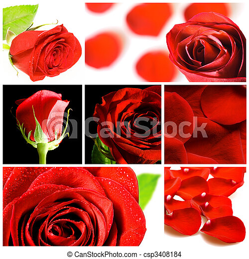 collage, rozen, gevarieerd, rood - csp3408184