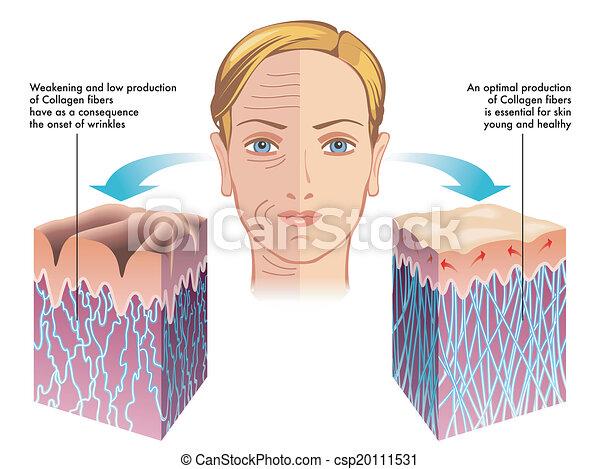collagen - csp20111531