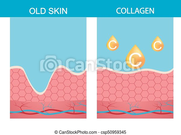 Collagen Skin Vector Structure Age Aging Beauty Body Dermatology Epidermis