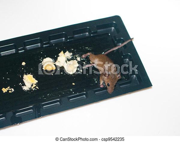 images de stock de colle pi ge souris plat attrap colle souris collant csp9542235. Black Bedroom Furniture Sets. Home Design Ideas
