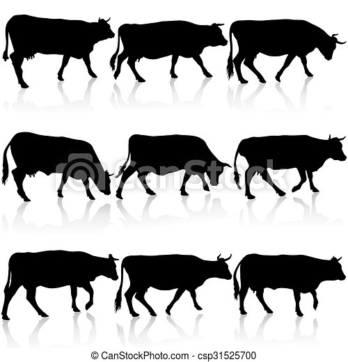 Collection  black silhouettes of cow. Vector illustration. - csp31525700