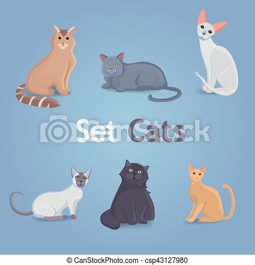 Collection Cats of Different Breeds. - csp43127980