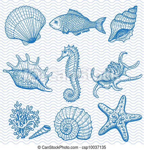 collection., ilustracja, ręka, morze, pociągnięty, oryginał - csp10037135