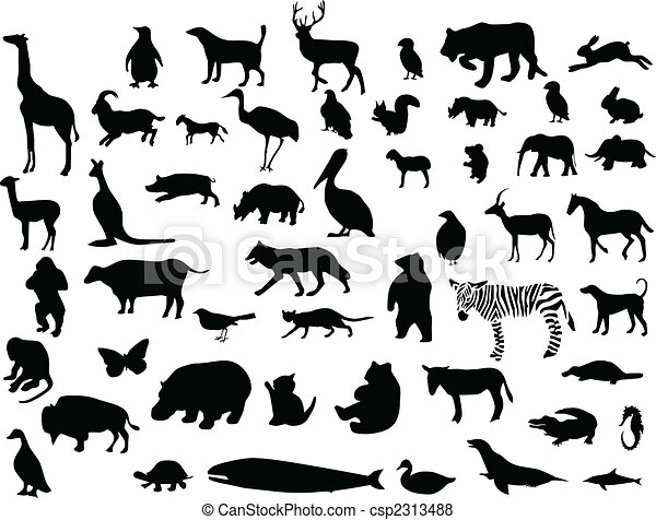 Collection of animal  - csp2313488