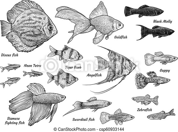 Collection Of Aquarium Fish Illustration Drawing Engraving Ink