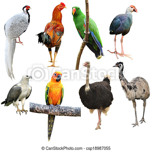 collection of bird isolated - csp18987055