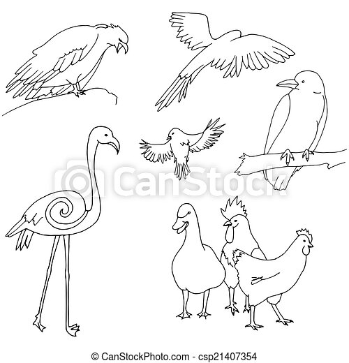 Collection of birds - csp21407354