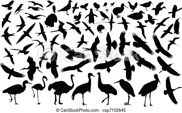 Collection of birds - csp7102645