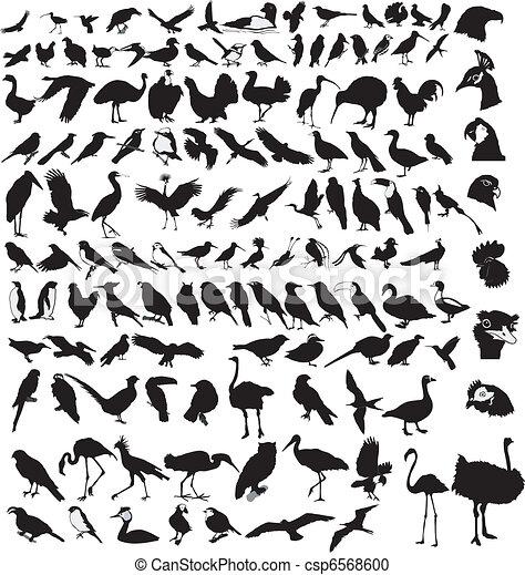 collection of birds - csp6568600