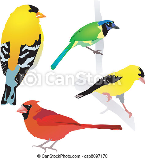 Collection of birds. Vector. EPS10 - csp8097170