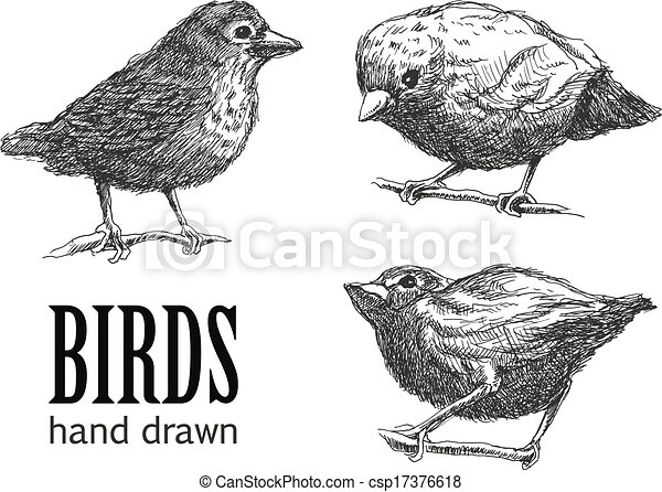 collection of birds. vector eps8 - csp17376618