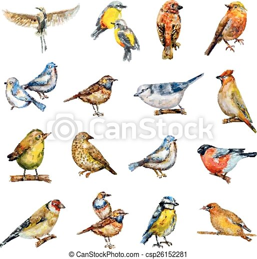 collection of birds. watercolor painting - csp26152281