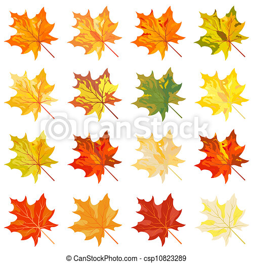 Collection of color autumn leaves - csp10823289