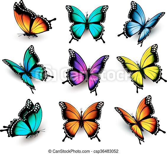 Collection of colorful butterflies, flying in different directions. Vector. - csp36483052