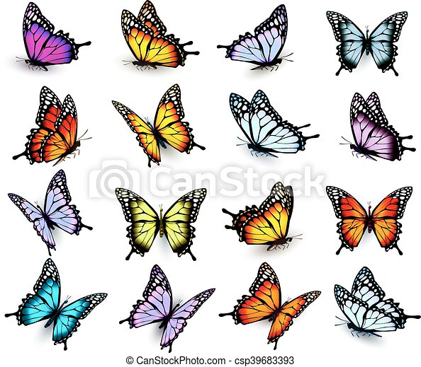 Butterfly Flying Drawings | www.pixshark.com - Images ...