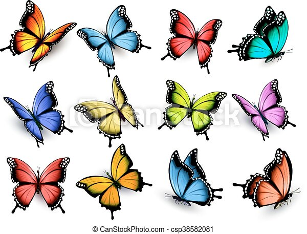 Collection of colorful butterflies, flying in different directions. Vector. - csp38582081