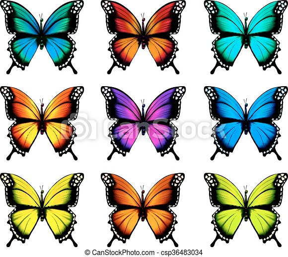 Collection of colorful butterflies, flying in different directions. Vector. - csp36483034
