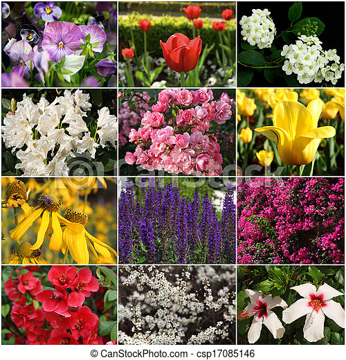 collection of colorful flowers - csp17085146