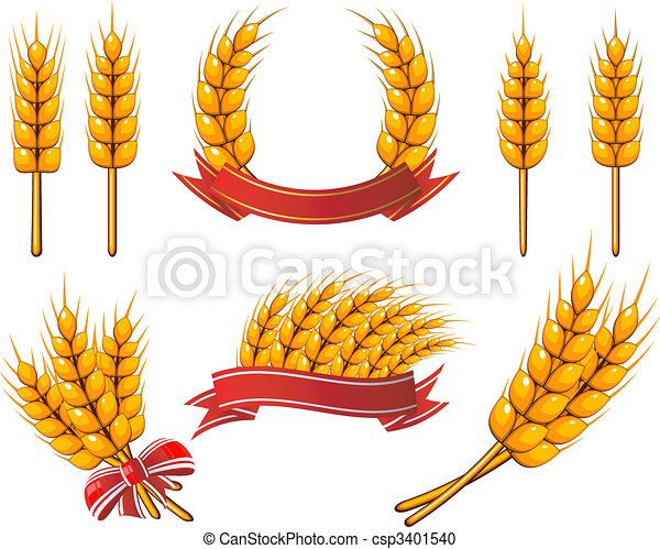 Collection of design elements. Wheat - csp3401540