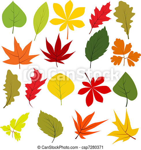 Collection of different autumn leaves isolated on white - csp7280371