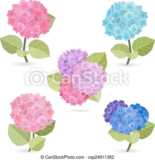 Collection of flowers, hydrangea - csp24911382