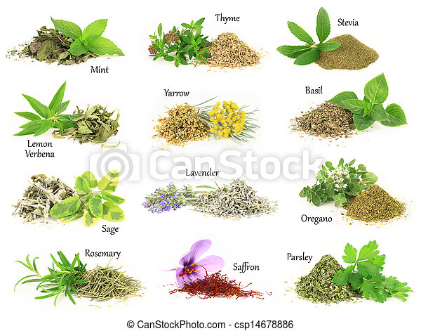 Collection of fresh and dry aromatic herbs - csp14678886