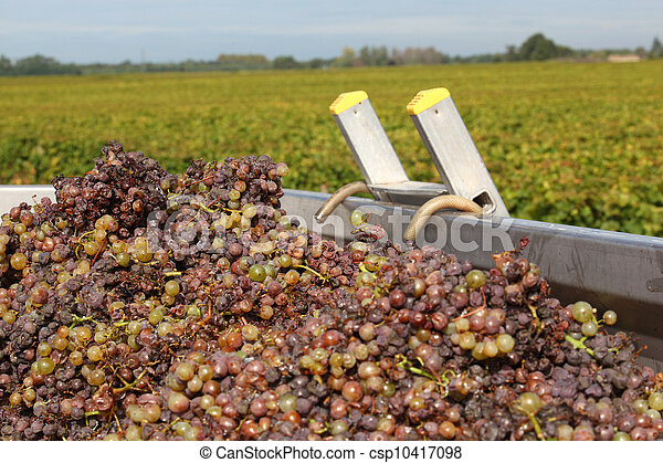 Collection of Grapes - csp10417098