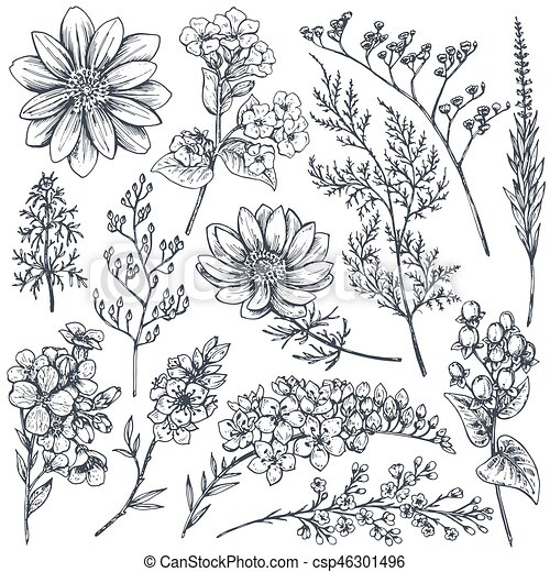 Collection Of Hand Drawn Spring Flowers And Plants Monochrome