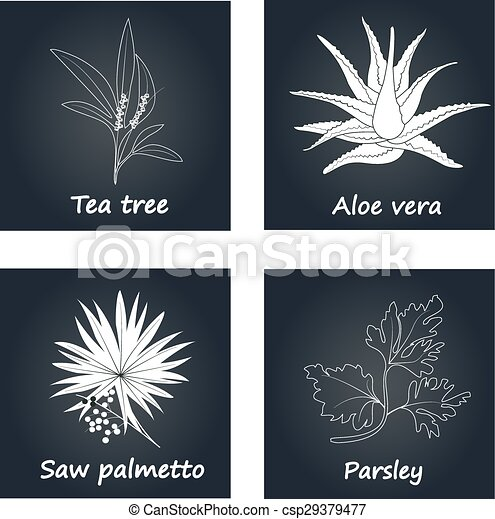 Collection of Herbs - csp29379477