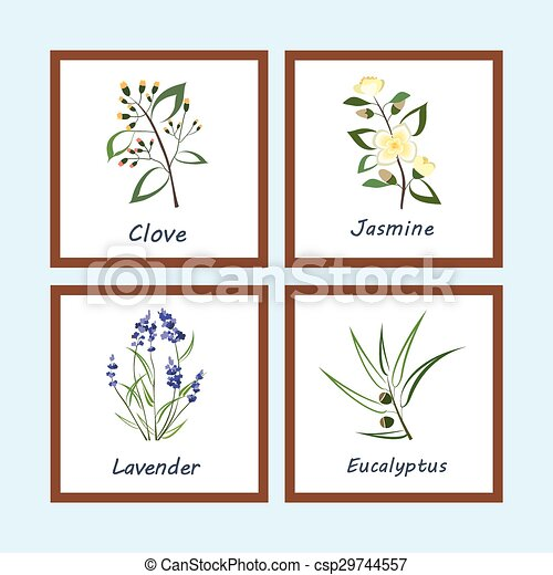 Collection of Herbs . Labels for Essential Oils and Natural Supplements. Lavender, Eucalyptus, Jasmine, Clove - csp29744557