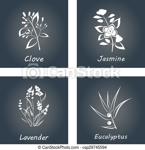 Collection of Herbs . Labels for Essential Oils and Natural Supplements. Lavender, Eucalyptus, Jasmine, Clove - csp29745594