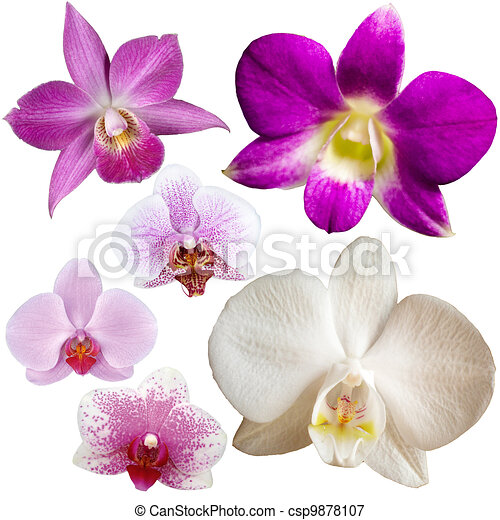 Collection of orchid flower isolated on white  - csp9878107