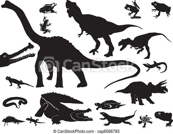 Collection of reptiles - csp6568793