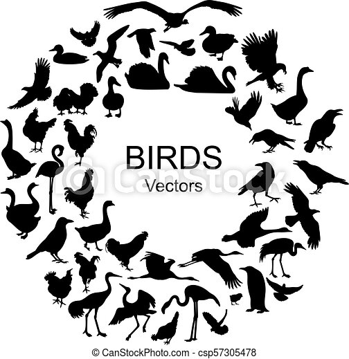 Collection of silhouettes of different species of birds - csp57305478